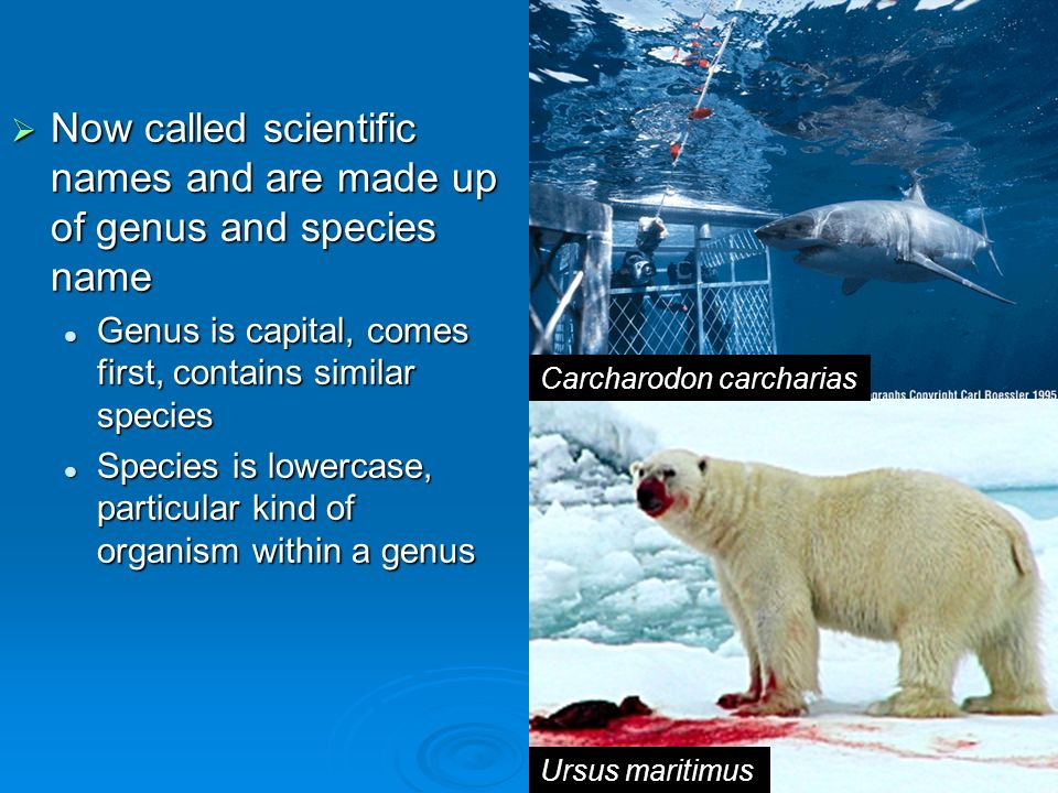 Now called scientific names and are made up of genus and species name
