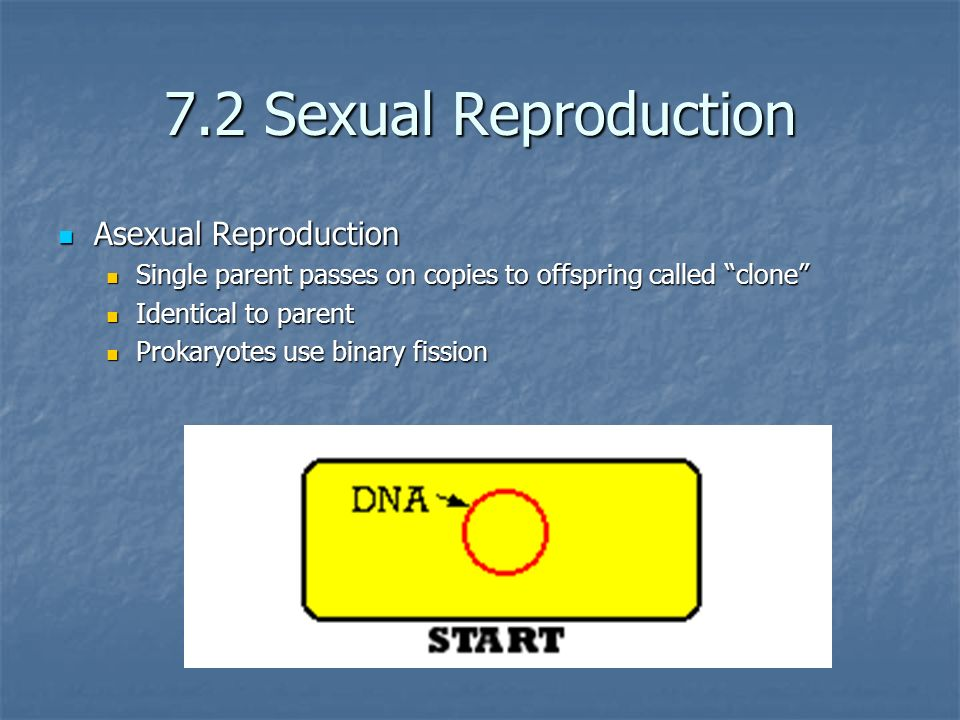 7.2 Sexual Reproduction Asexual Reproduction
