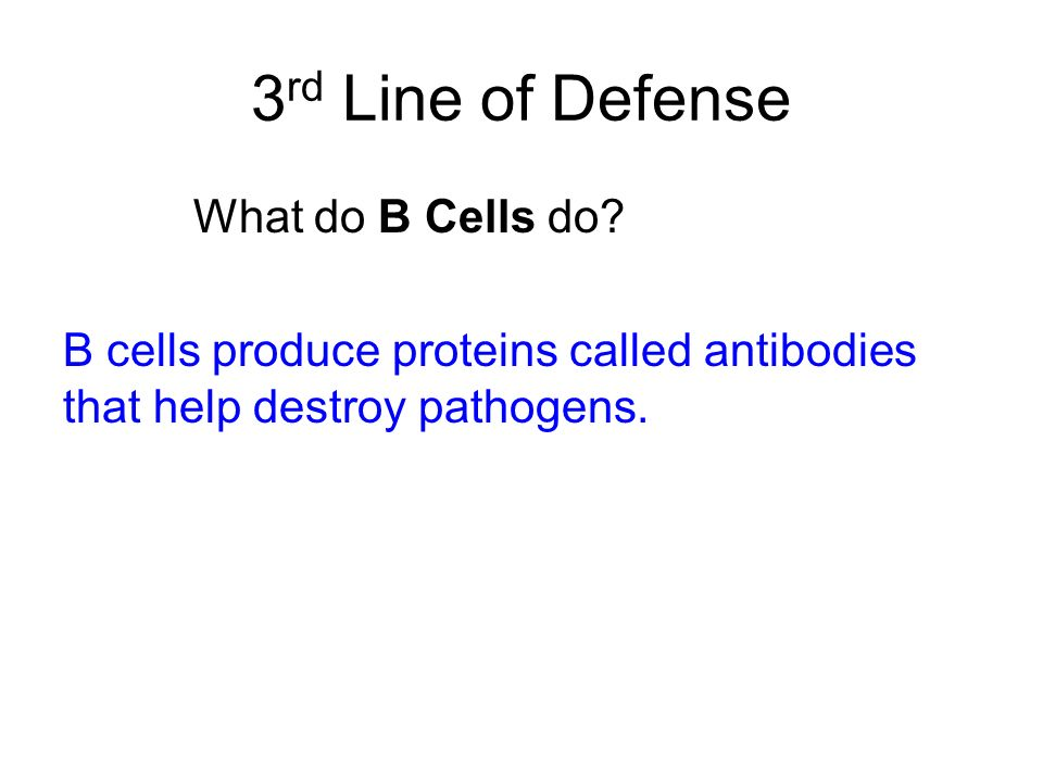 3rd Line of Defense What do B Cells do