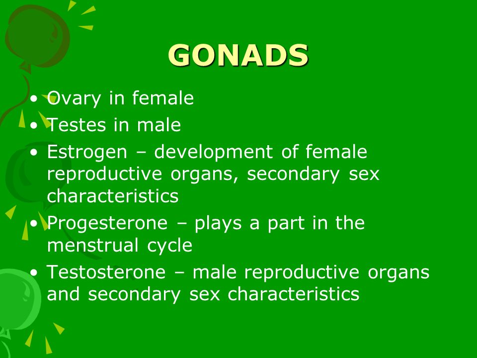 GONADS Ovary in female Testes in male