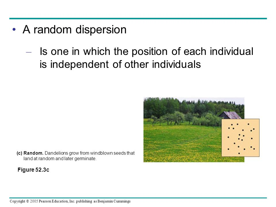 A random dispersion Is one in which the position of each individual is independent of other individuals.