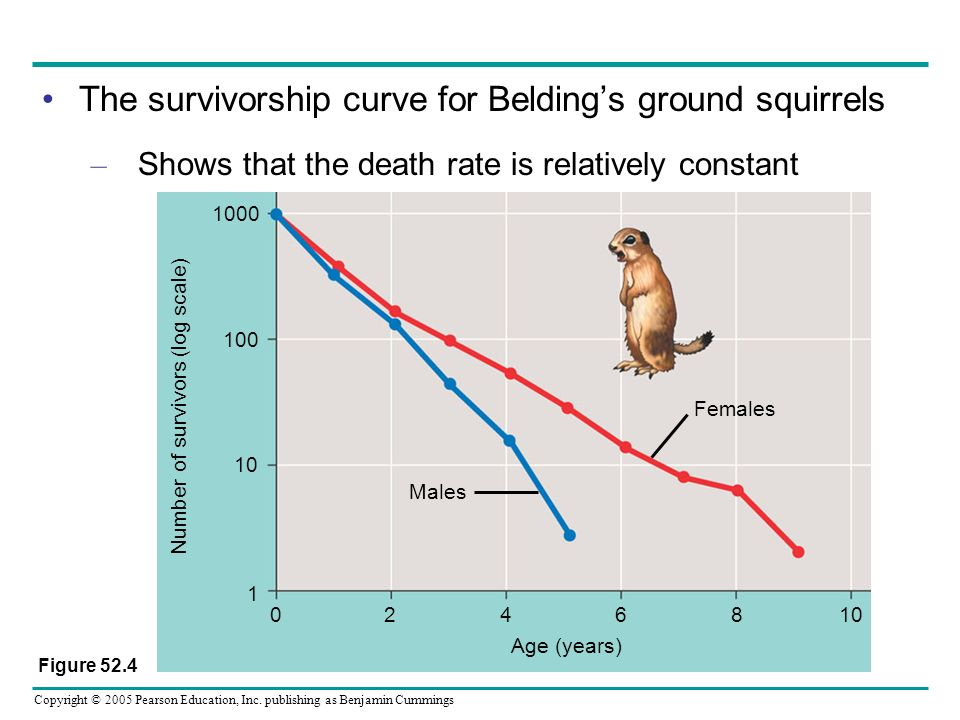 The survivorship curve for Belding's ground squirrels