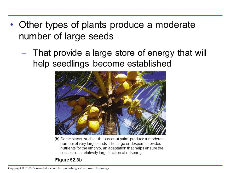 Other types of plants produce a moderate number of large seeds