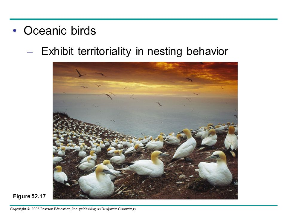 Oceanic birds Exhibit territoriality in nesting behavior Figure 52.17