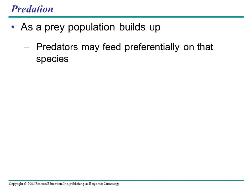 As a prey population builds up
