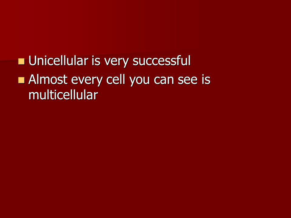 Unicellular is very successful