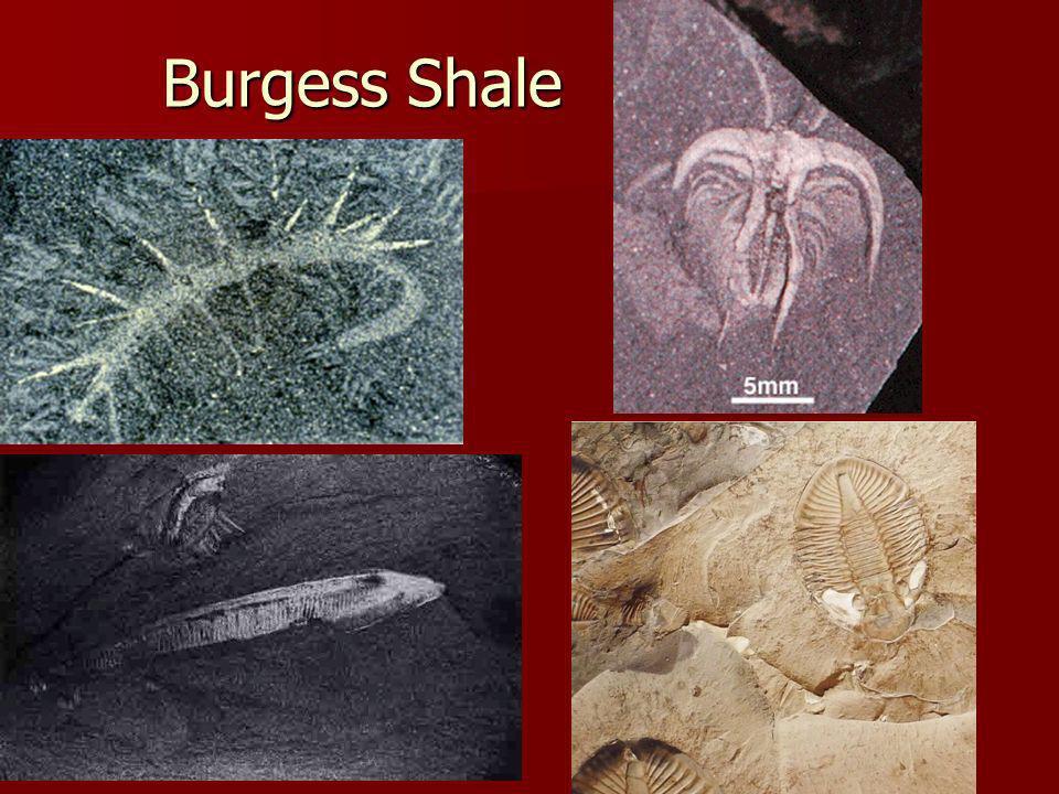 Burgess Shale