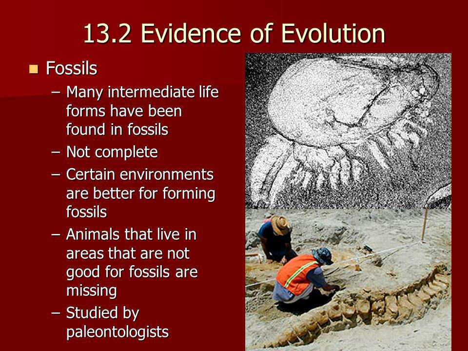 13.2 Evidence of Evolution Fossils
