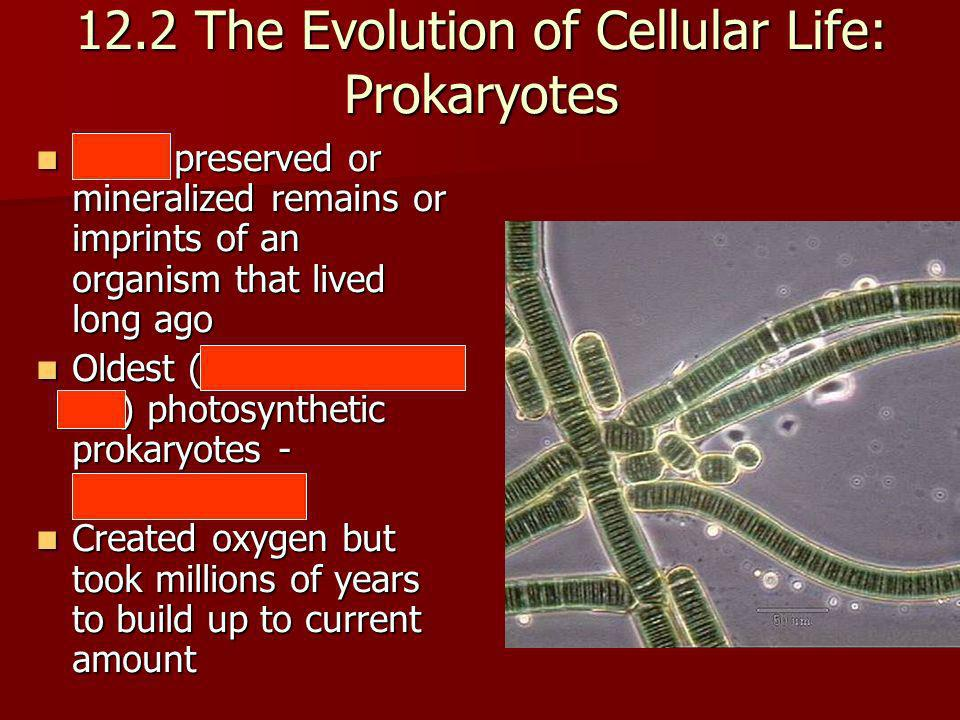 12.2 The Evolution of Cellular Life: Prokaryotes