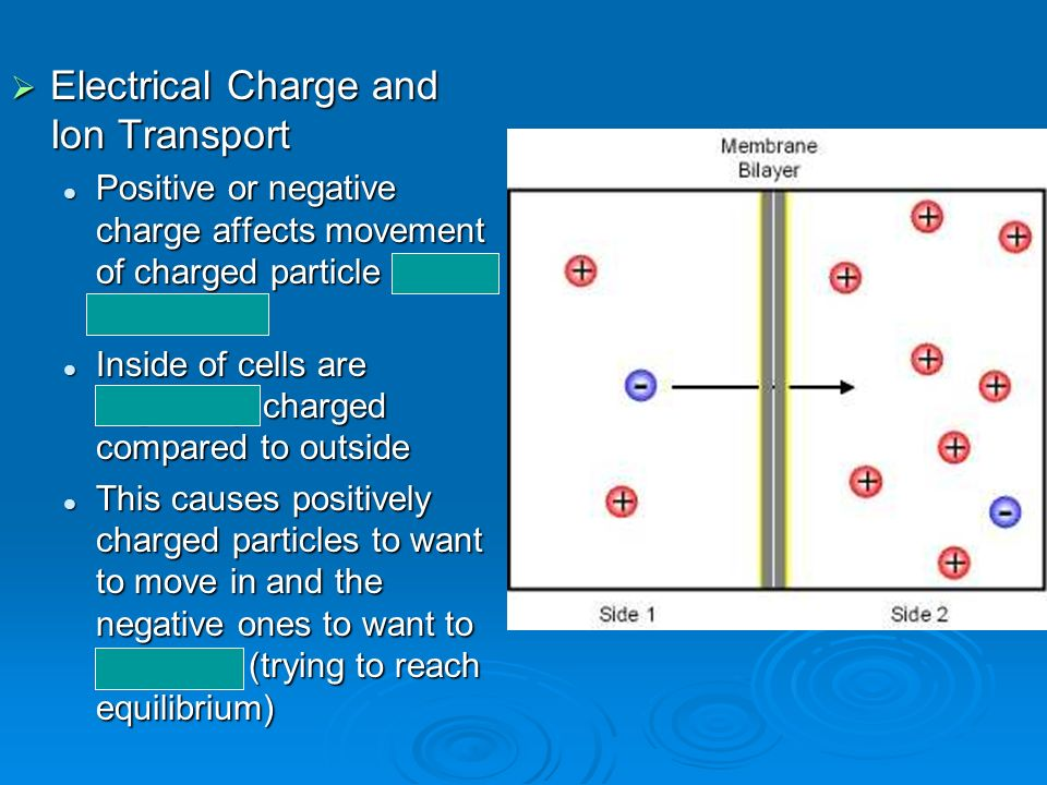 Electrical Charge and Ion Transport