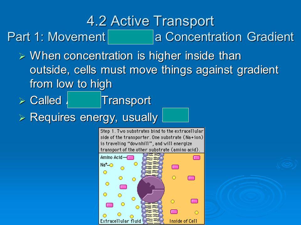 4.2 Active Transport Part 1: Movement Against a Concentration Gradient