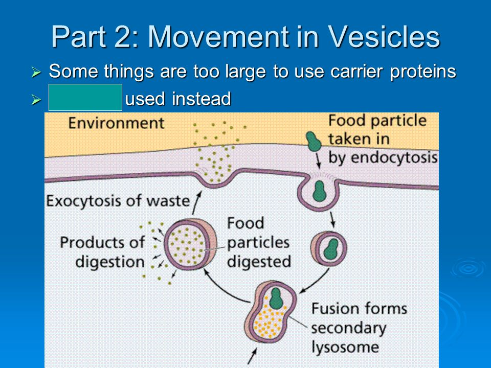 Part 2: Movement in Vesicles