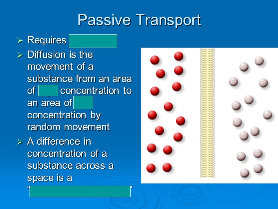 Passive Transport Requires no energy