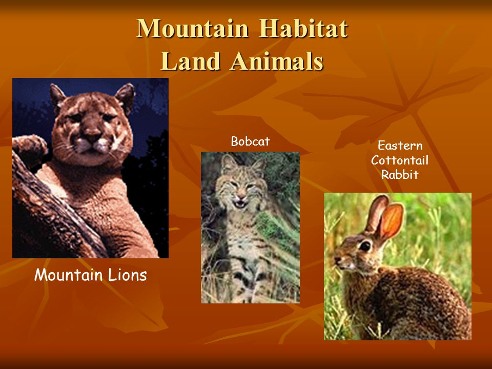 Mountain Habitat Land Animals