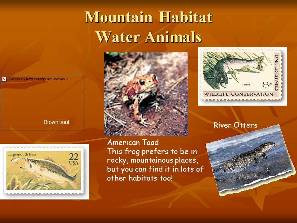Mountain Habitat Water Animals