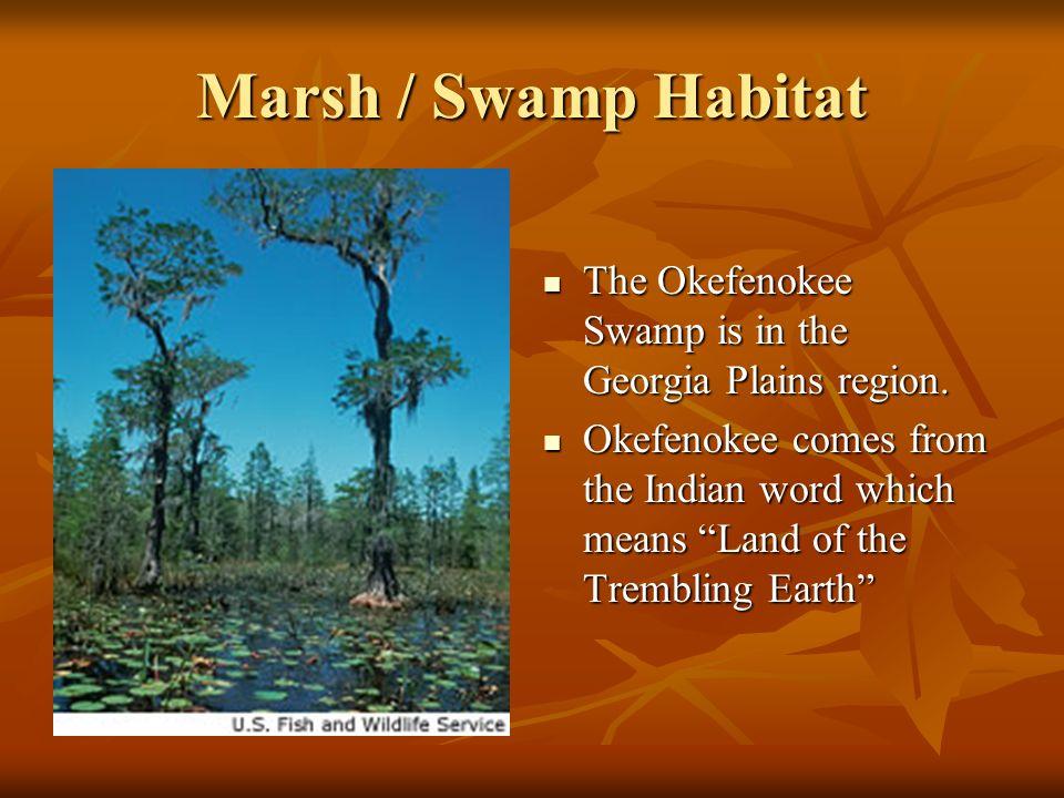 Marsh / Swamp Habitat The Okefenokee Swamp is in the Georgia Plains region.