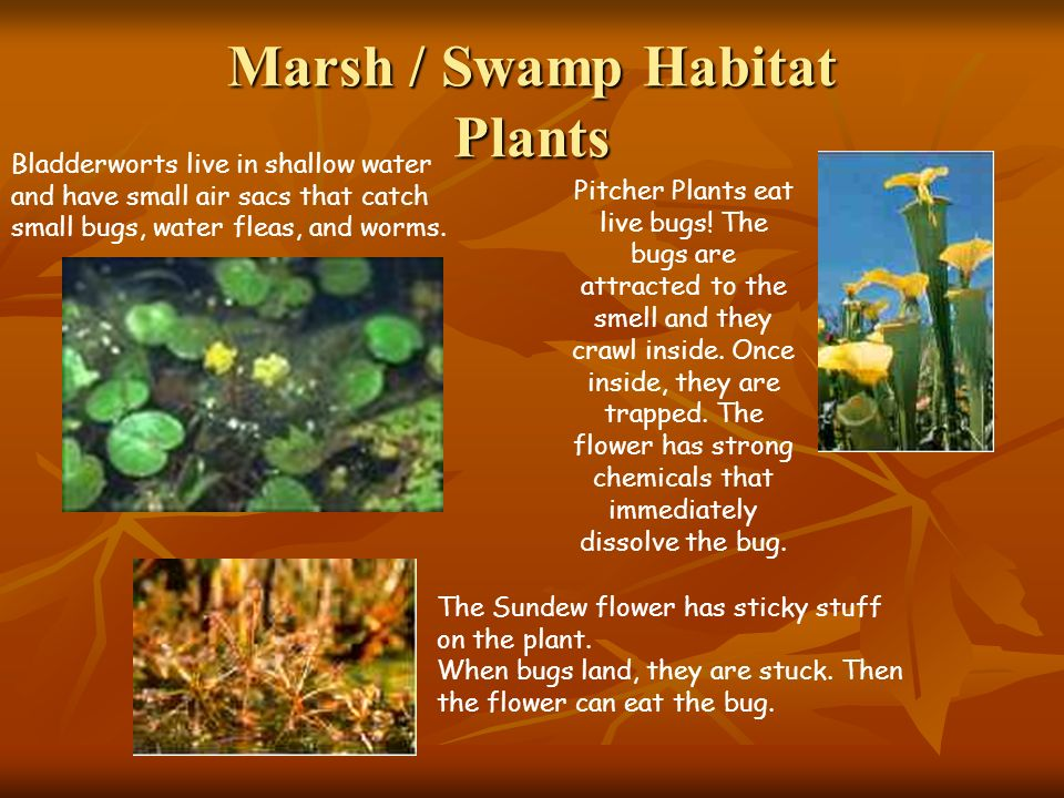 Marsh / Swamp Habitat Plants