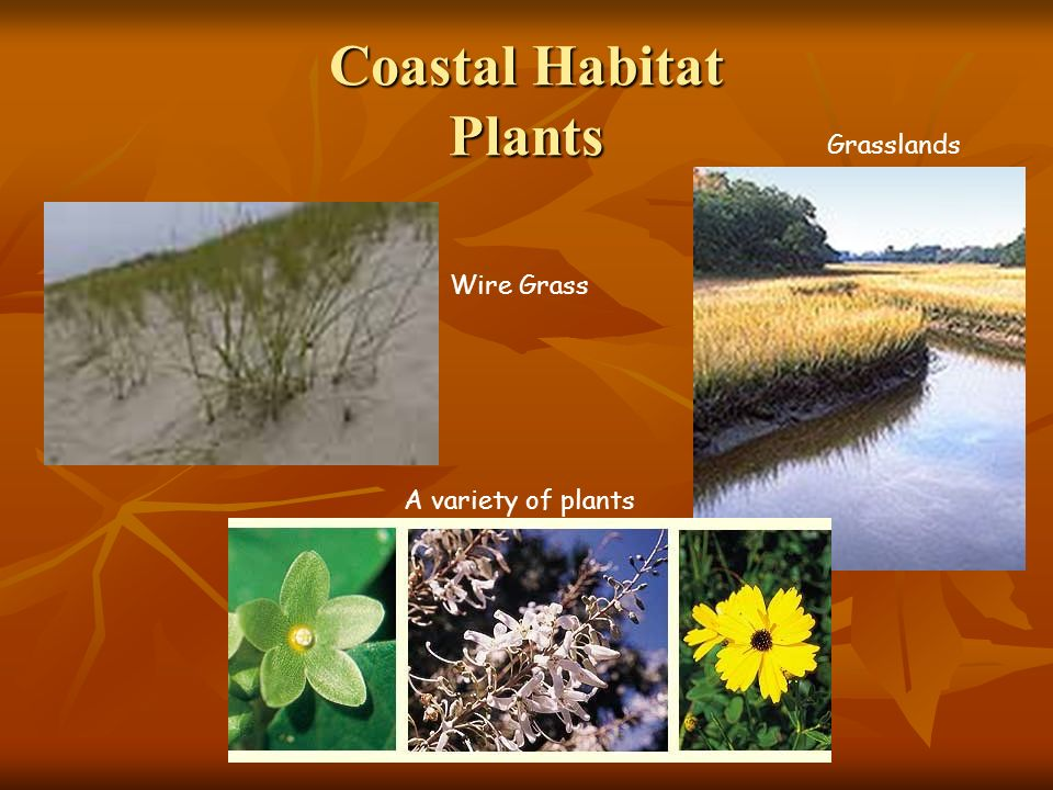 Coastal Habitat Plants