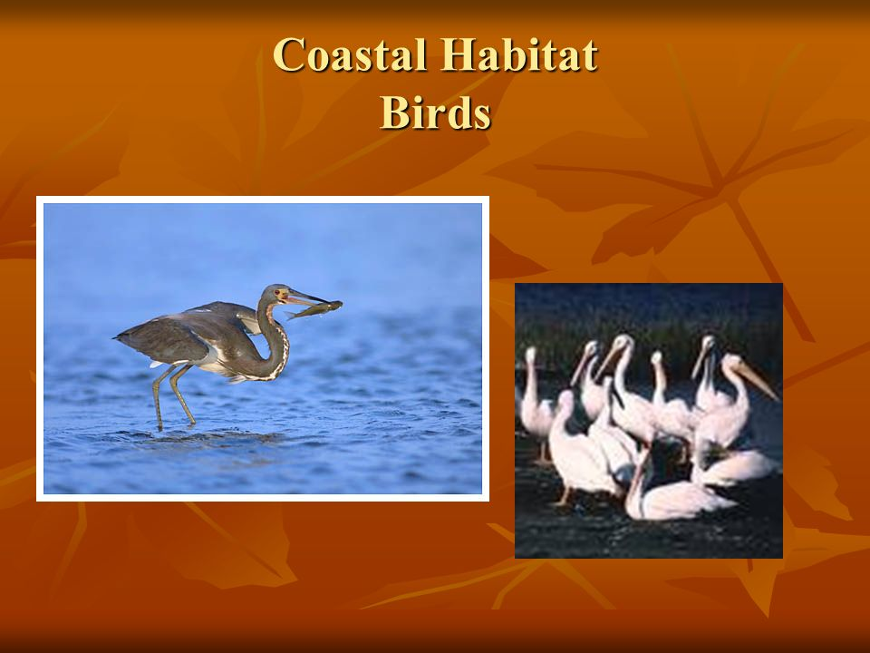 Coastal Habitat Birds