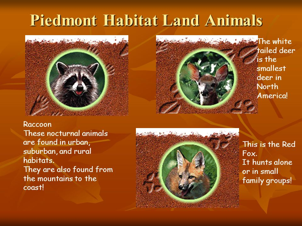 Piedmont Habitat Land Animals