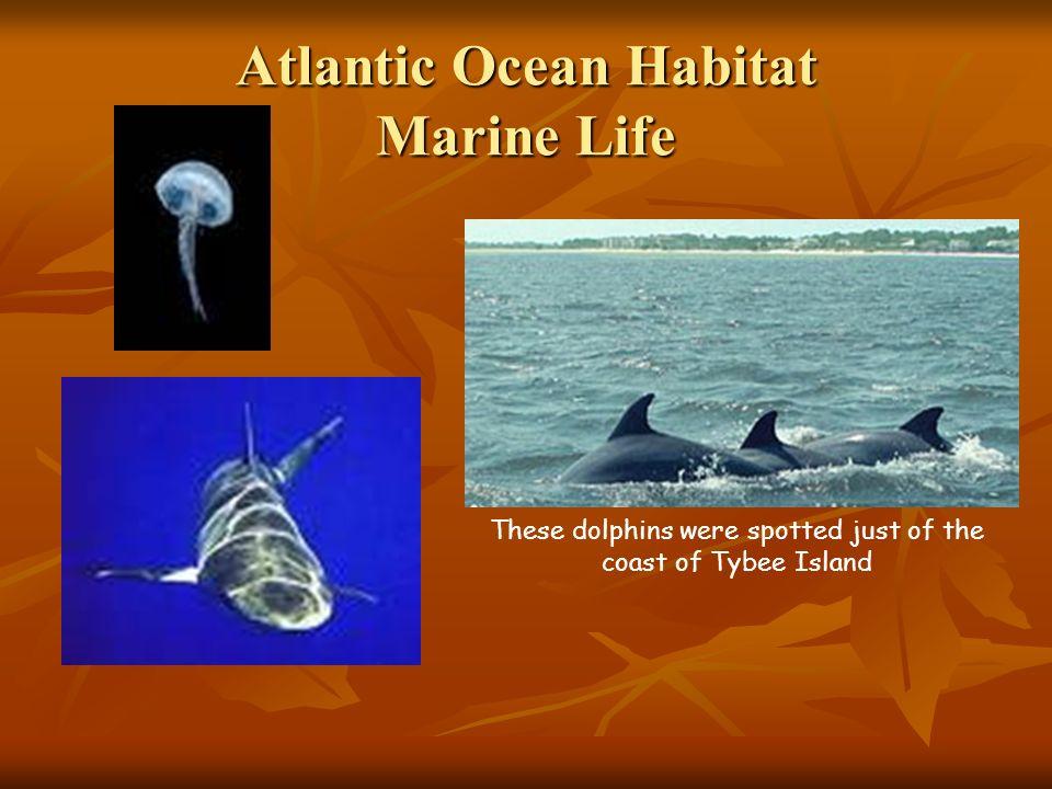 Atlantic Ocean Habitat Marine Life