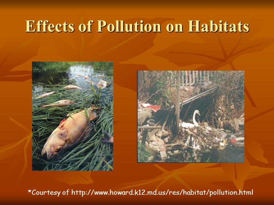 Effects of Pollution on Habitats