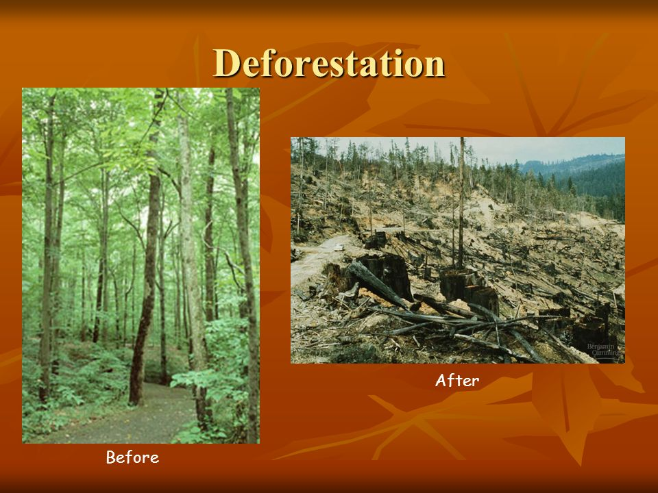 Deforestation After Before