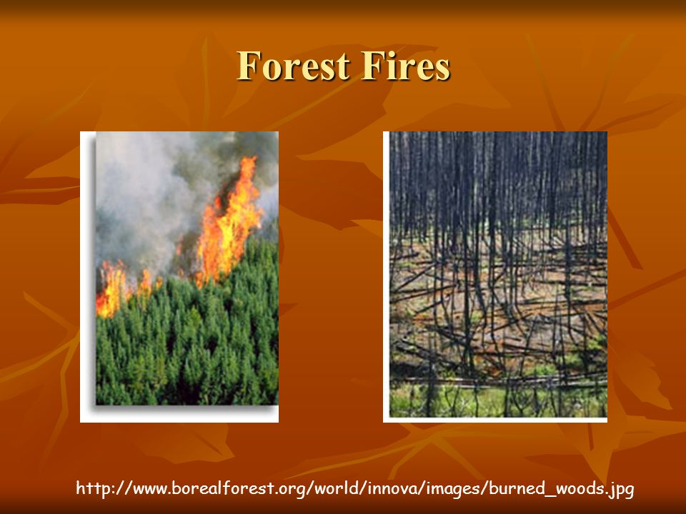 Forest Fires http://www.borealforest.org/world/innova/images/burned_woods.jpg