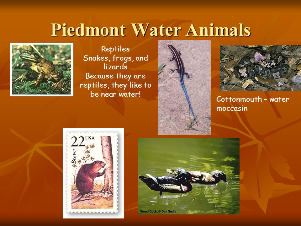 Piedmont Water Animals