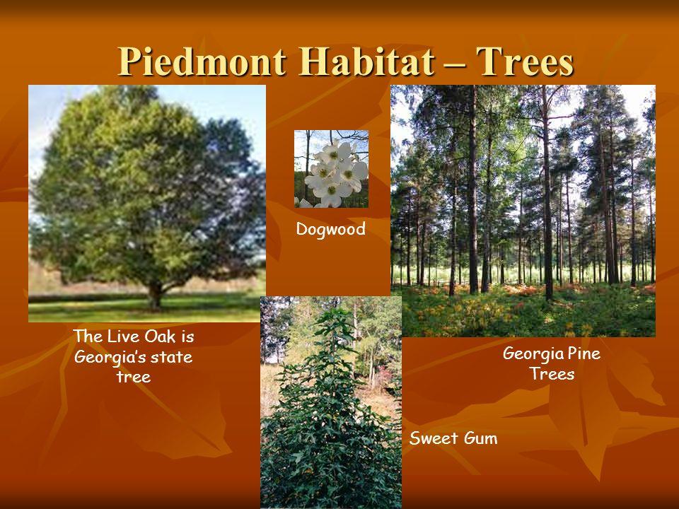 Piedmont Habitat – Trees