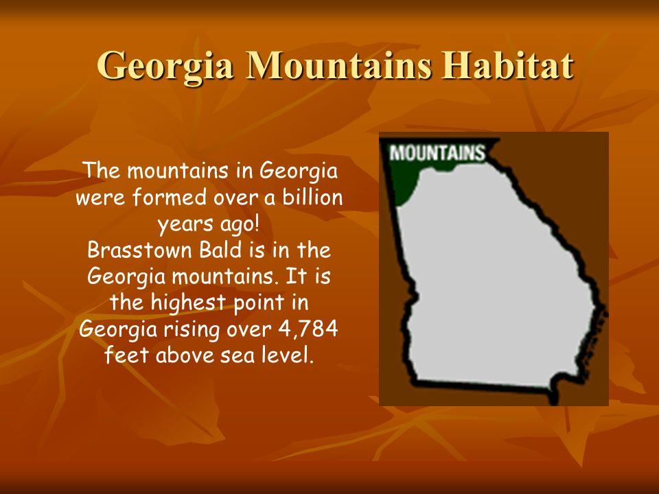 Georgia Mountains Habitat