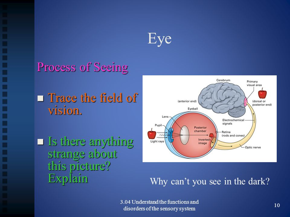 Eye Process of Seeing Trace the field of vision.