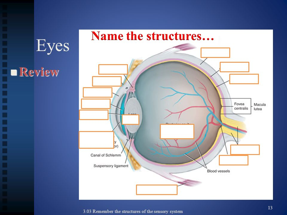 Eyes Name the structures… Review 13