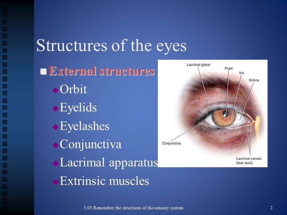 Structures of the eyes External structures Orbit Eyelids Eyelashes