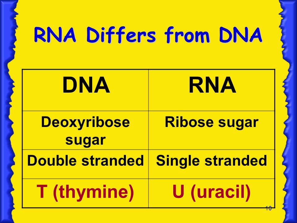 DNA RNA RNA Differs from DNA T (thymine) U (uracil) Deoxyribose sugar