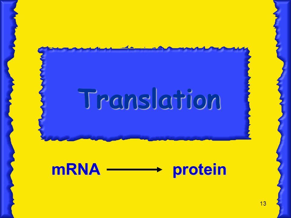 Translation mRNA protein
