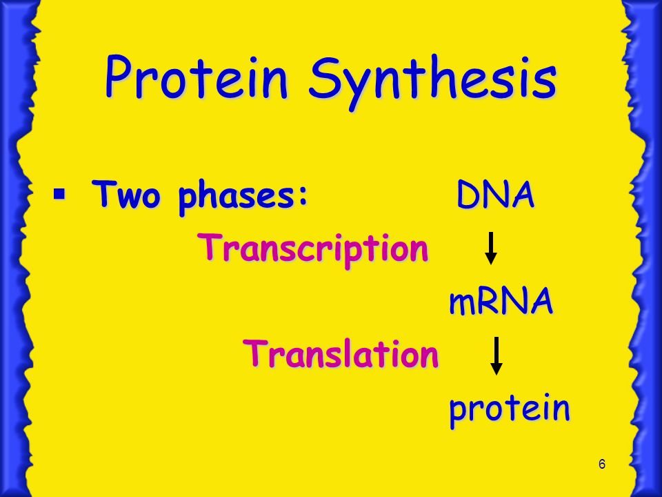 Protein Synthesis Two phases: DNA Transcription mRNA Translation