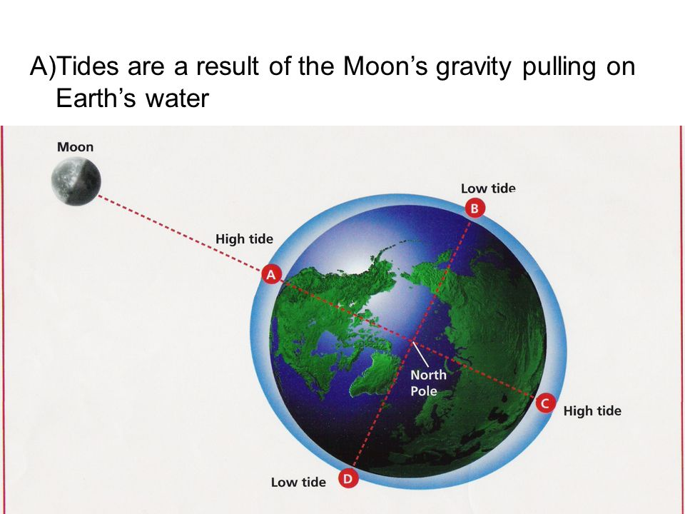 Tides are a result of the Moon's gravity pulling on Earth's water
