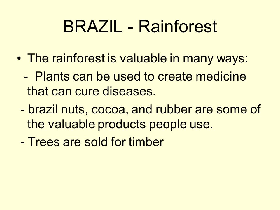 BRAZIL - Rainforest The rainforest is valuable in many ways: