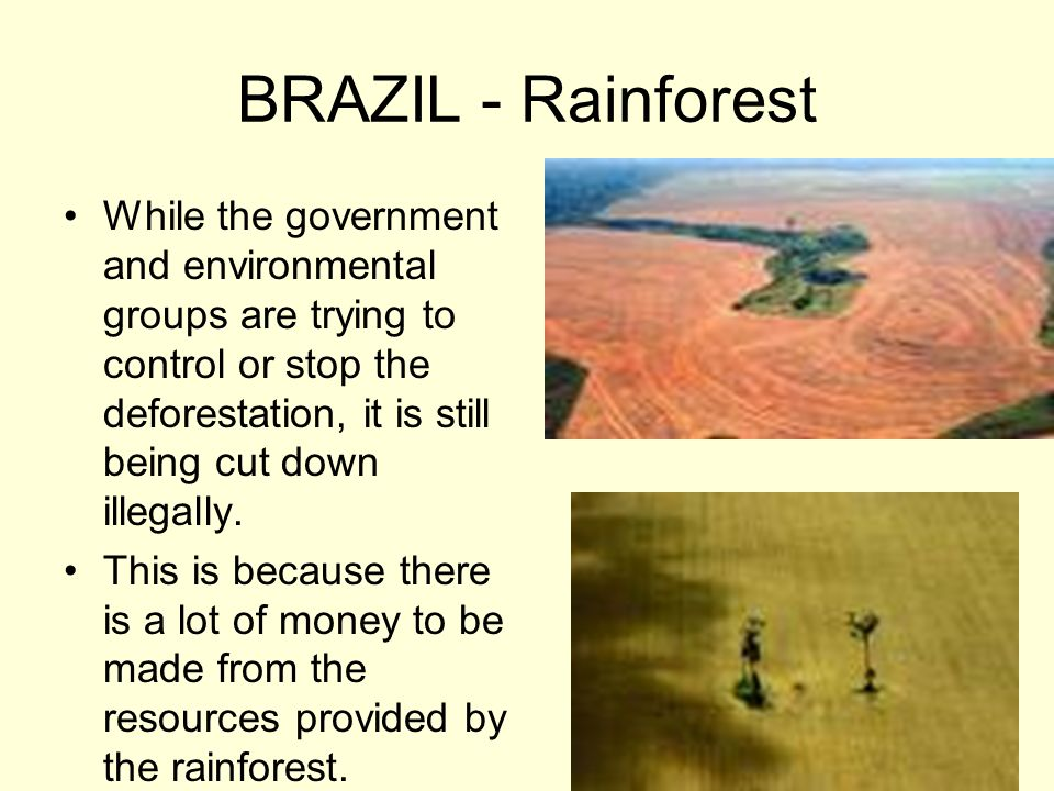 BRAZIL - Rainforest