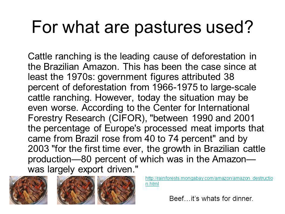 For what are pastures used