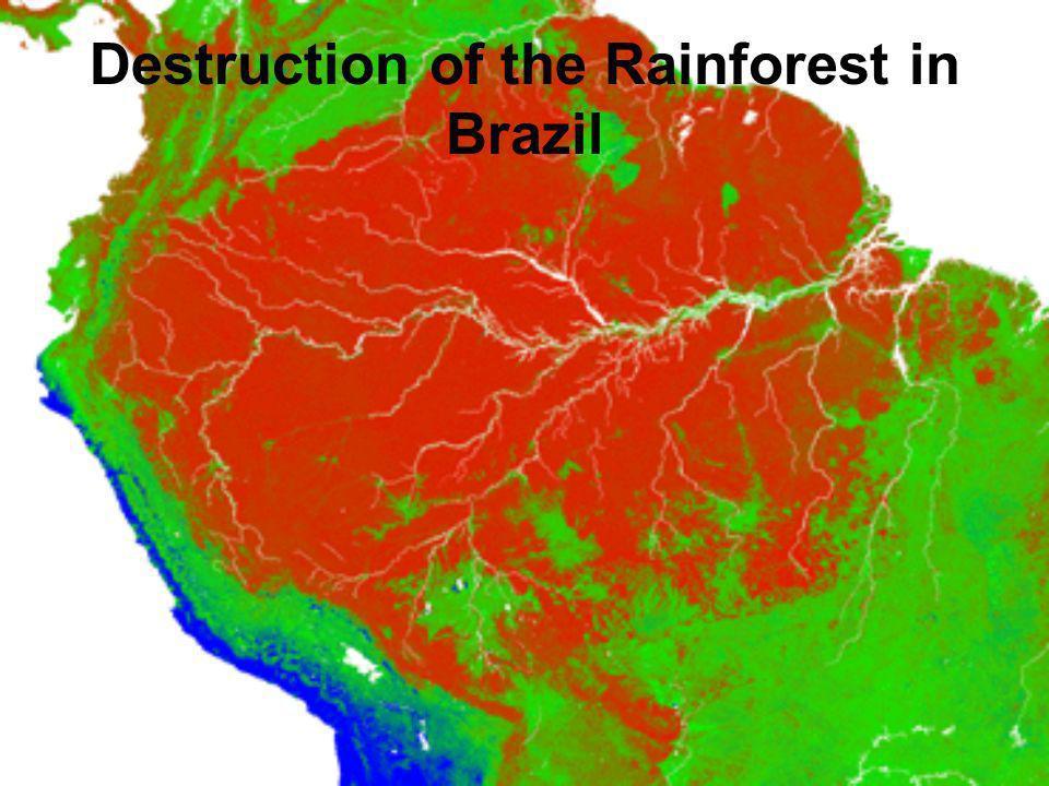 Destruction of the Rainforest in Brazil