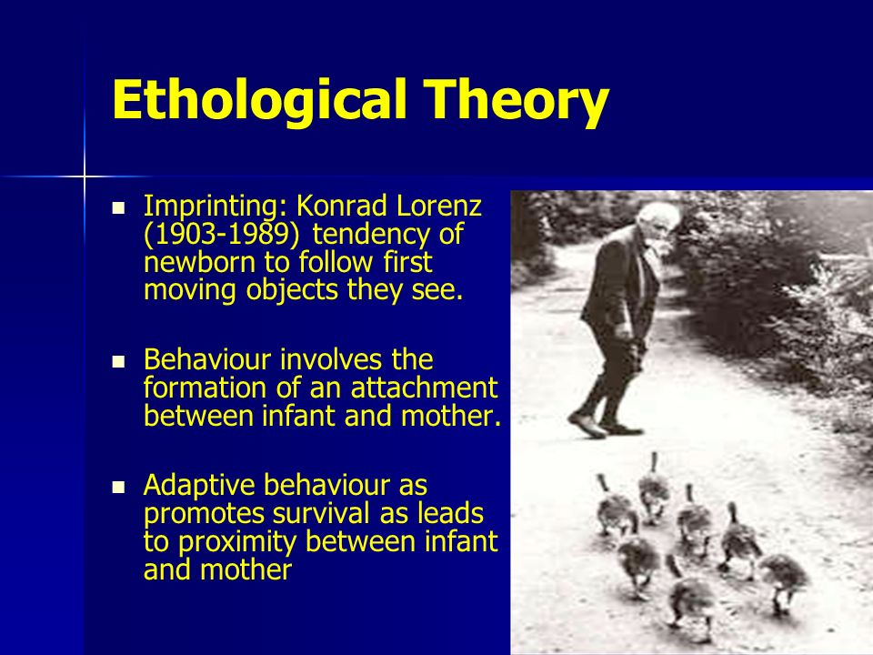 imprinting and human attachment behaviours Best answer: first described by konrad lorenz, imprinting is said to occur when innate behaviours are released in response to a learnt stimulus most imprinting.