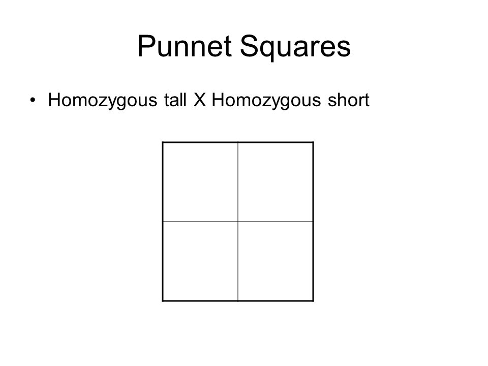 Punnet Squares Homozygous tall X Homozygous short