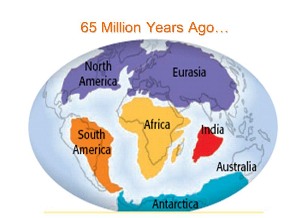 65 Million Years Ago…