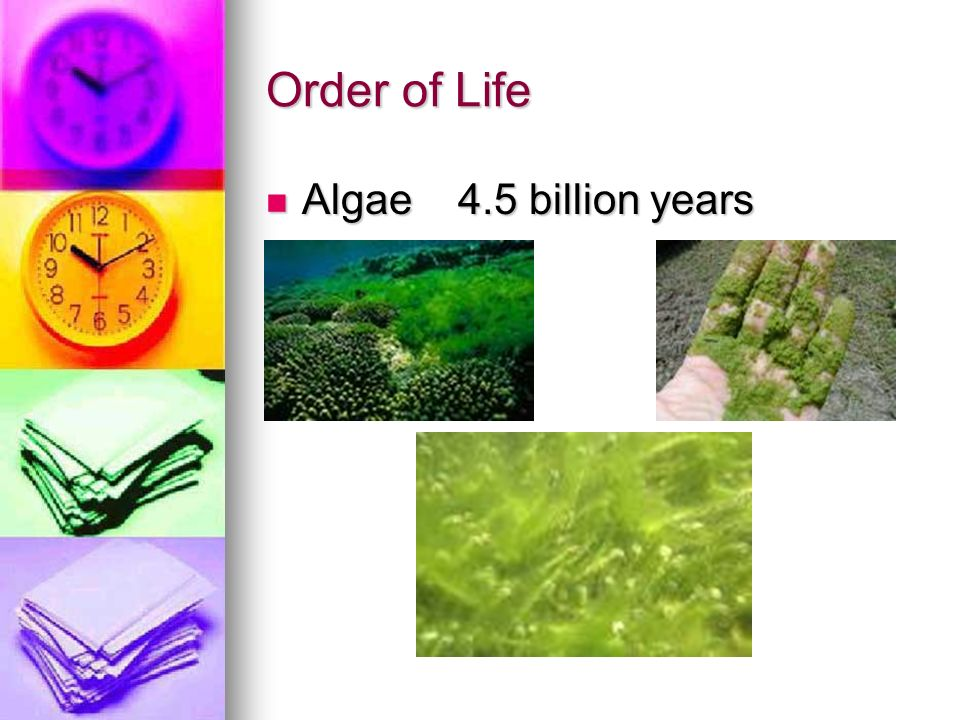 Order of Life Algae 4.5 billion years