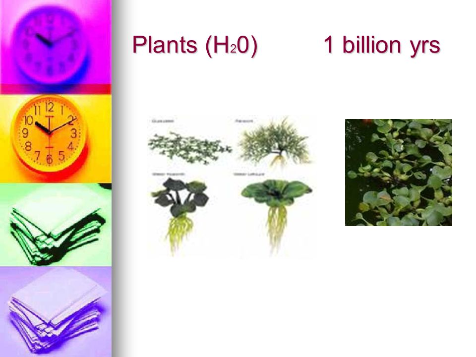 Plants (H20) 1 billion yrs