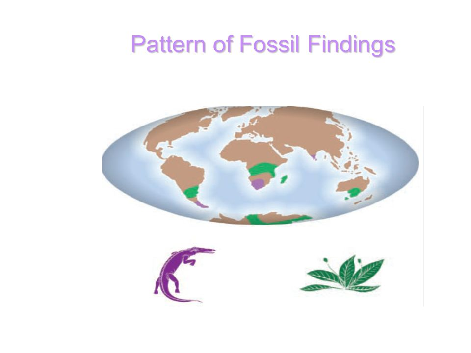 Pattern of Fossil Findings