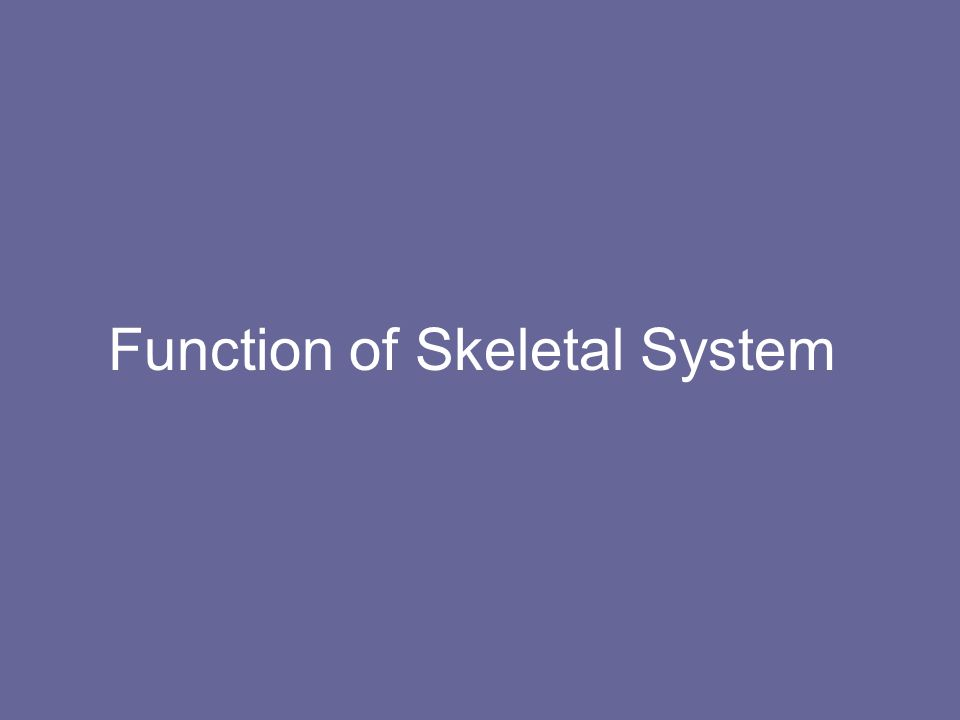 Function of Skeletal System
