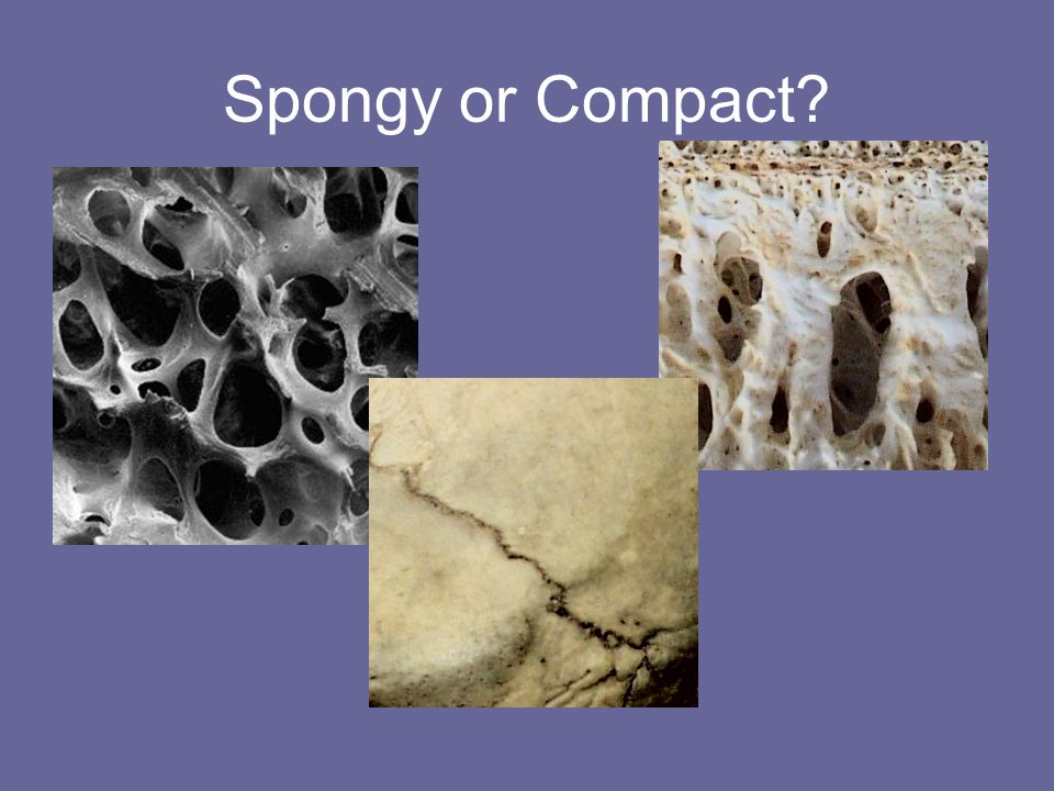 Spongy or Compact